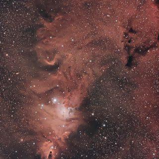 20191108-NGC2264-Christmas-Tree-Cluster