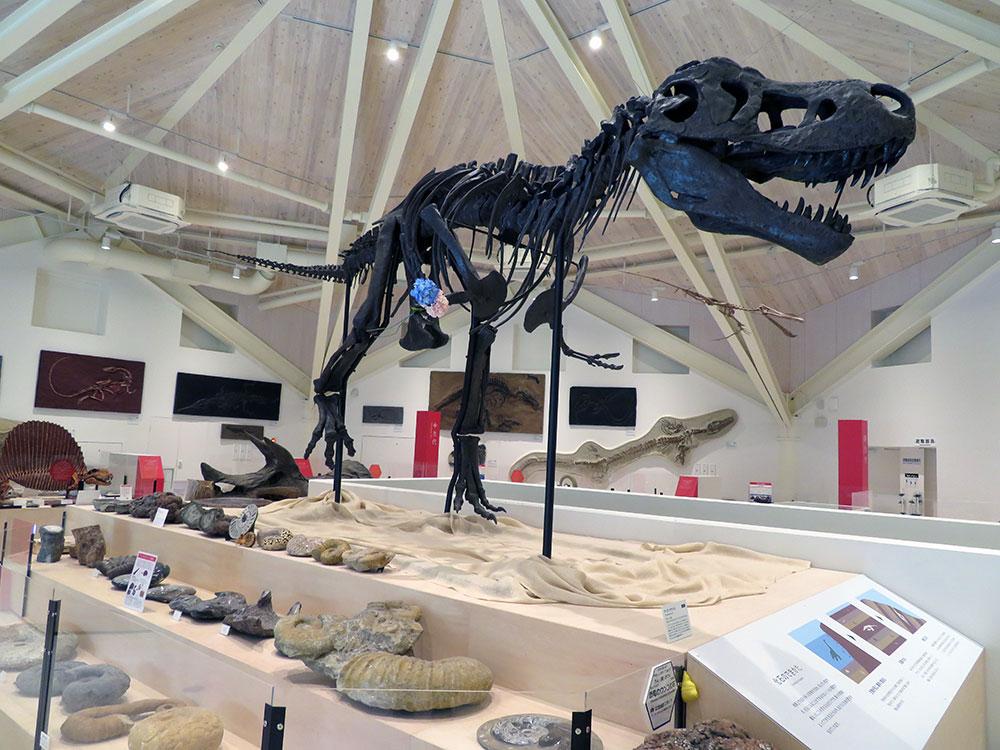 化石展示コーナー